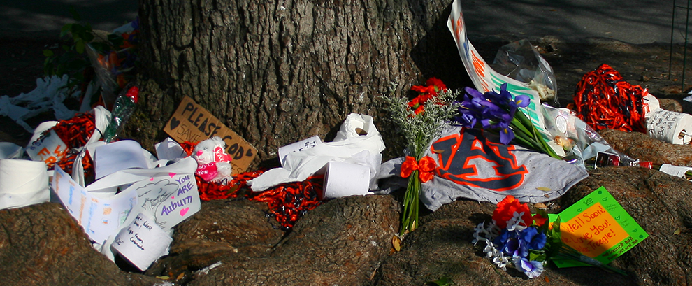 Toomer's Oak Trees